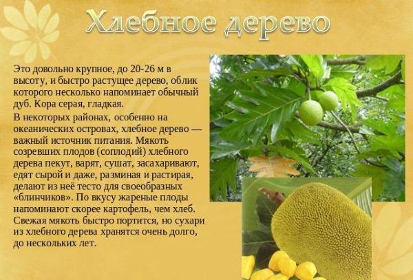 Экзотические фрукты. Фото с названиями, калорийность, БЖУ. Как готовить и употреблять