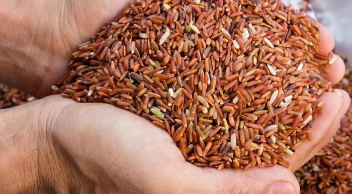 Рис. Польза и вред, виды, калорийность, рецепты, как употреблять