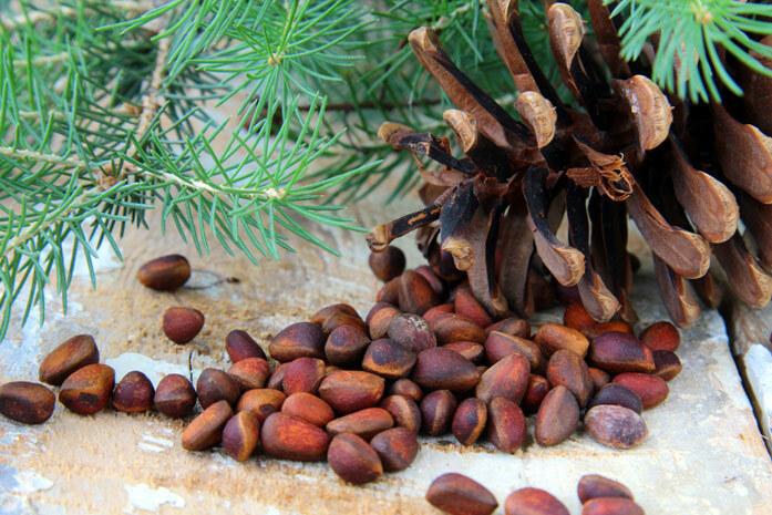 Кедровые орехи. Калорийность на 100 грамм, 1 шт., в столовой ложке, польза для организма, сколько употреблять