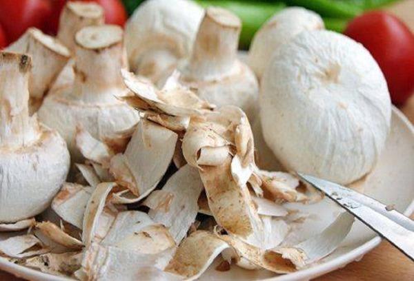 Шампиньоны. Польза и вред для организма человека, рецепты, как приготовить грибы