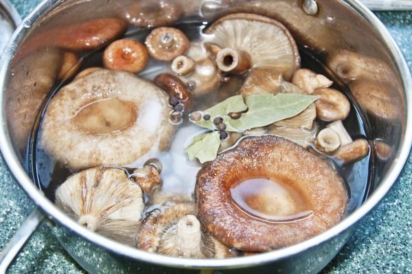 Как приготовить волнушки горячим, холодным способом. Как жарить, солить, рецепты на зиму