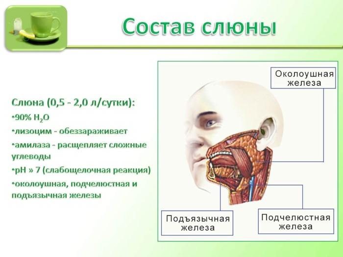 Кислотно-щелочной баланс организма. Как проверить, восстановить, анализ крови