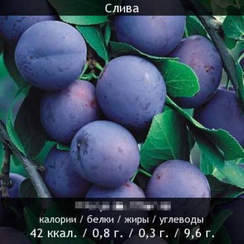 Свежая синяя слива. Польза и вред, калорийность на 100 грамм, в 1 шт, белки, жиры, углеводы