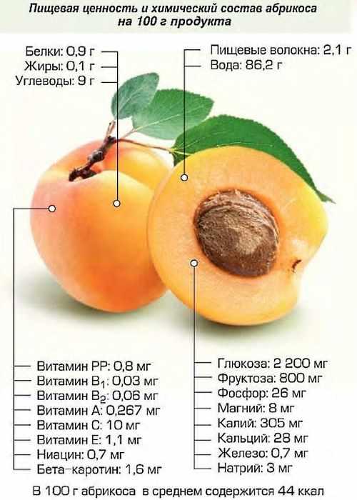 Абрикосы. Польза и вред для здоровья, калорийность на 100 грамм, в 1 штуке